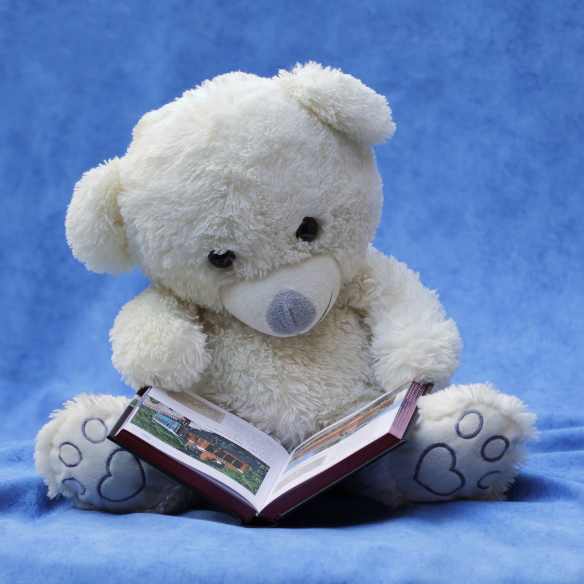 still-life-teddy-white-read-159080